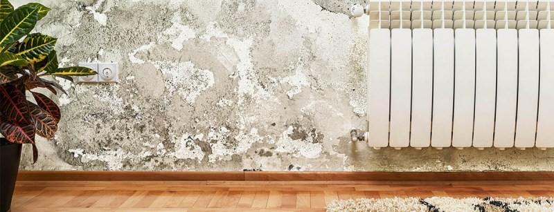Плесень на стенах - 70 фото профилактики и методов избавления